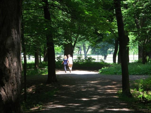 Sur le mont Royal, l'avenue du Parc en arrière-plan - Juillet 2013.