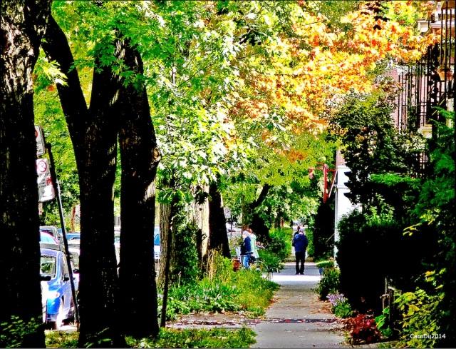 COMME JE L'ENTENDS - Rosemont, Montréal, Septembre 2014