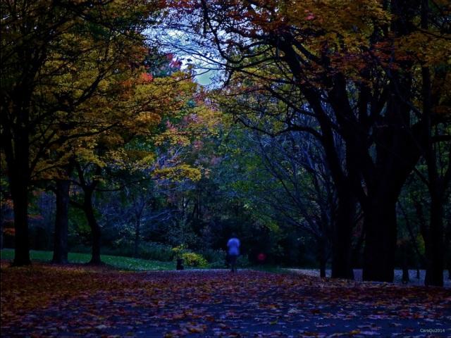 L'HEURE BLEUE - Soir de la mi-octobre, sur le mont Royal