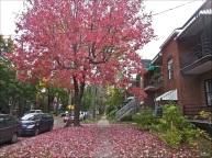 ROSE VILLE - Rosemont, Montréal, octobre 2014