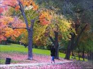 PLANCHER ROSE ET AUTRES MERVEILLES - Le 14 octobre 2014, sur le mont Royal...
