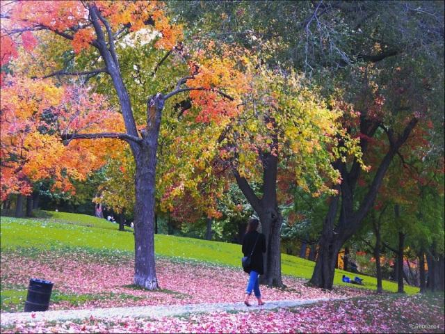 PLANCHER ROSE ET AUTRES MERVEILLES - Le 14 octobre, sur le mont Royal...