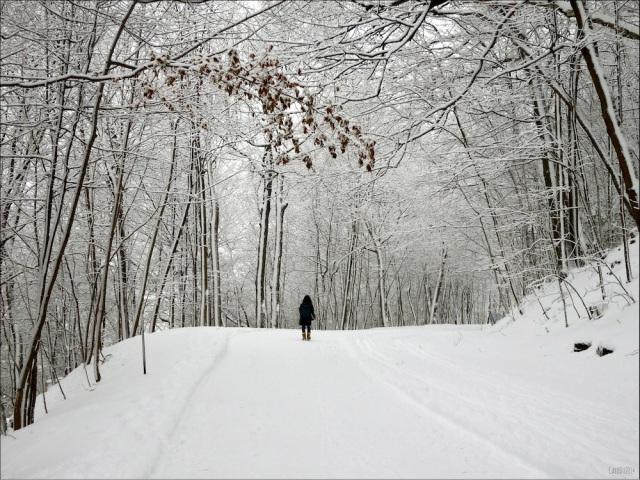 BLANCHEUR ET AUTRES TRANQUILITÉS - Mont-Royal, 12 décembre 2014, Montréal