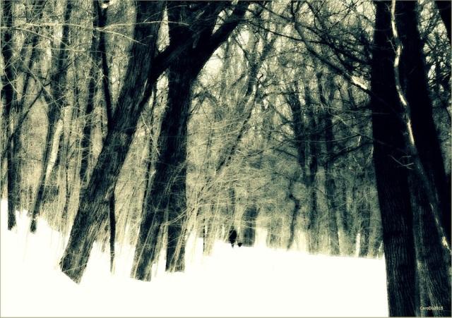 UNE FEMME ET SON CHIEN Le mont Royal, à l'approche du printemps - Montréal