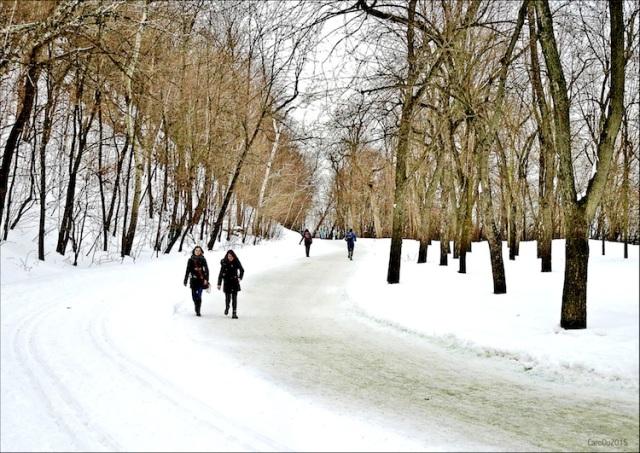 LENTEUR DE MISE - Il y a quelques jours, sur le mont Royal, Montréal