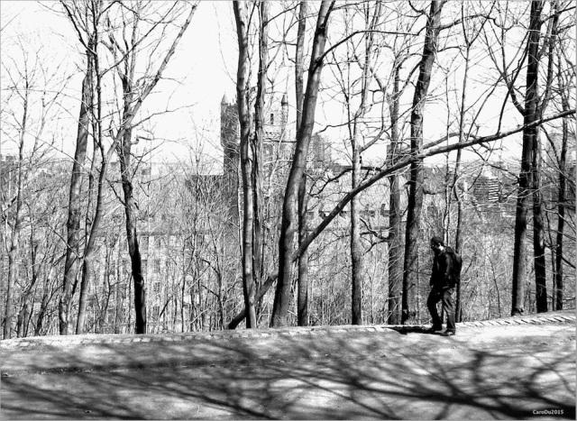 ET OÙ S'EN VA MALBROUGH? Avril sur le mont Royal, au coeur de Montréal