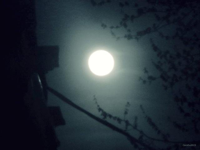 L'ÉBLOUISSANTE (même sans son beau visage) - Dimanche soir dernier, de mon balcon avant