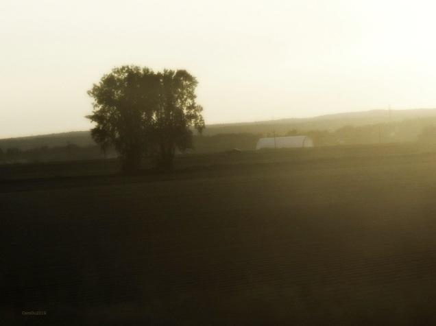 Abendlicht (lumière du soir)