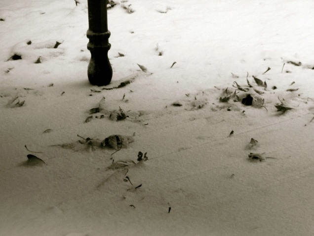 Ce matin, la neige