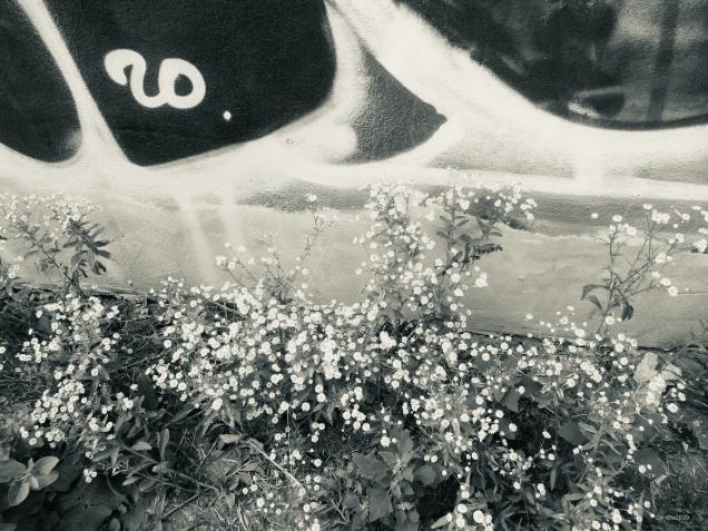 Mur et fleurs