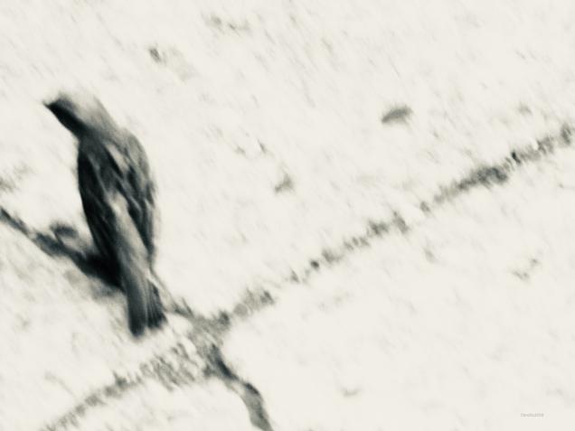 Le bel oiseau sur le trottoir