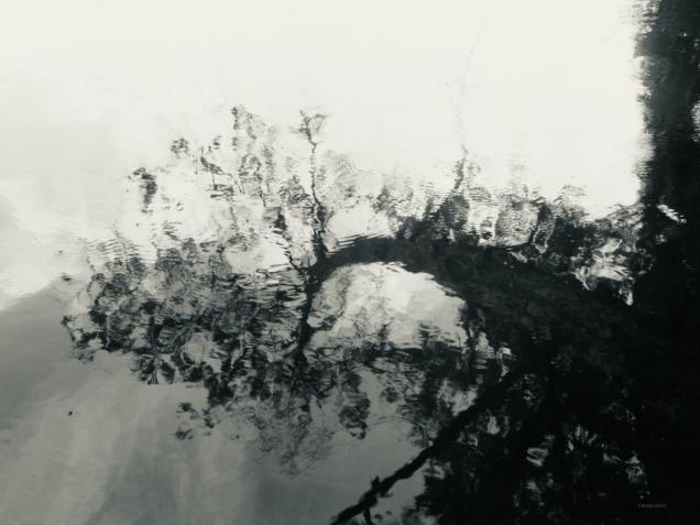 Reflet d'arbre mort